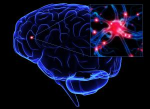 neurozoom-cerebro-5