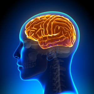 neurozoom-cerebro-4